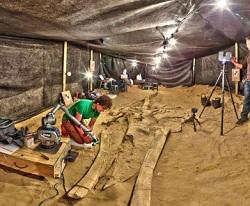 Cimitero Balene di Atacama mistero risolto