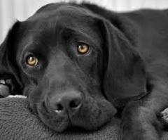 Il cane ci rende giovani e senza stress