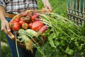 Una app per aiutare l'agricoltura biologica
