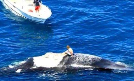 Australia balene sugli scogli si salvano in quattro