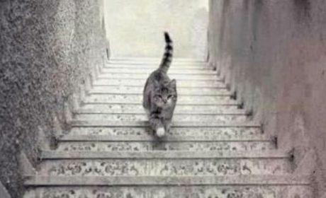 I cybernauti stavolta si chiedono se il gatto sale o scende la scala