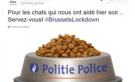 Belgio, Twitter pieno di gatti
