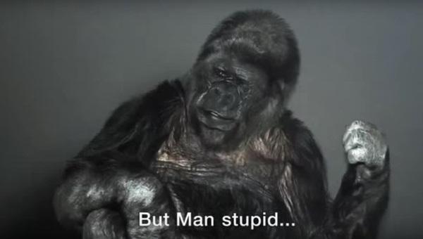Koko, la gorilla che parla con il linguaggio dei segni