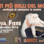 Mille gatti in gara all'Expo Felina di Padova
