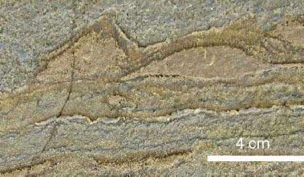 Ha 3,7 miliardi di anni il fossile più vecchio di sempre